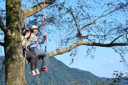感恩大樹老師,讓我們在樹上共同學習。圖片來源:黃淑玲