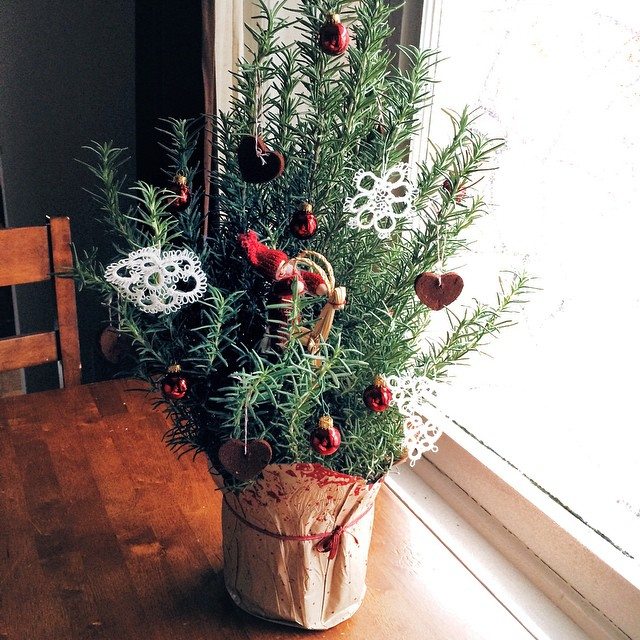"""Since we're spending the holidays out of town this year, this is our """"tree"""". It's rosemary, and I kind of love it."""