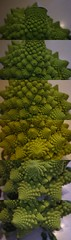 Disjoint Romanesco Broccoli Panorama