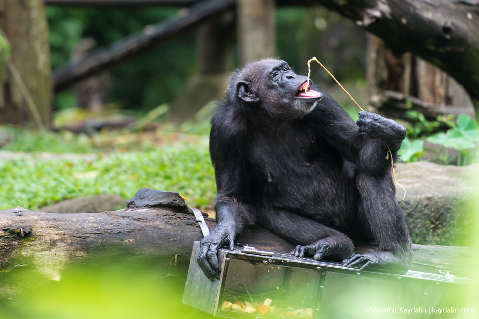 Сингапурский зоопарк, фотоотчет