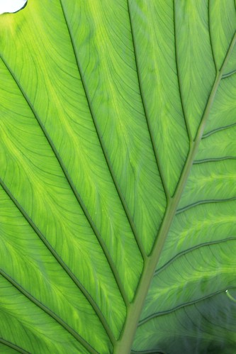 Kew, Royal Botanic Gardens 22-02-2014