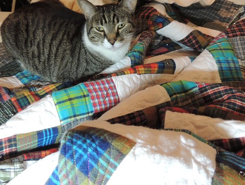 Johnny helps when I'm quilting the quilt