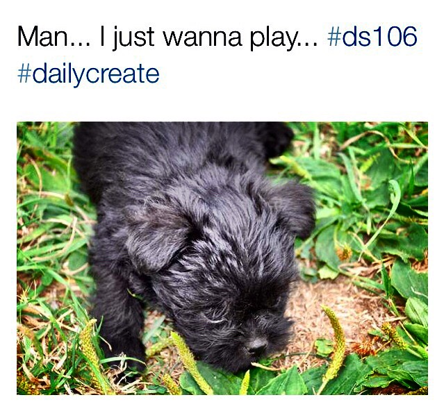 It's Puppy Love #dailycreate #tdc1123
