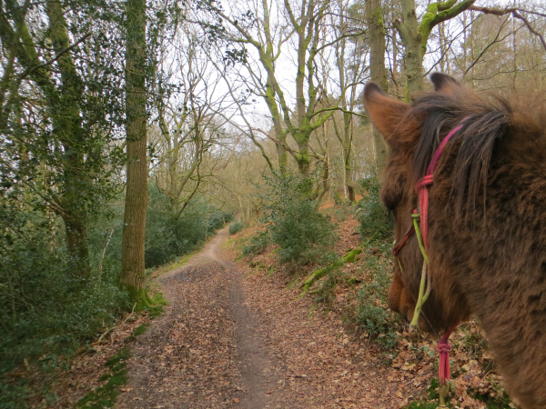 Mule on the Trail