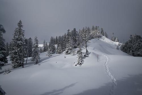 schnee winter snow landscape schweiz switzerland europe suisse 28mm rangefinder snowshoeing mp svizzera raquette schwyz 2015 svizra leicam schneeschuh schneeschuhlaufen schneeschuhwanderung elmaritm messsucher 150228 typ240 ©toniv m2402340 brunnifurggelenstockoberiberg leimgütsch