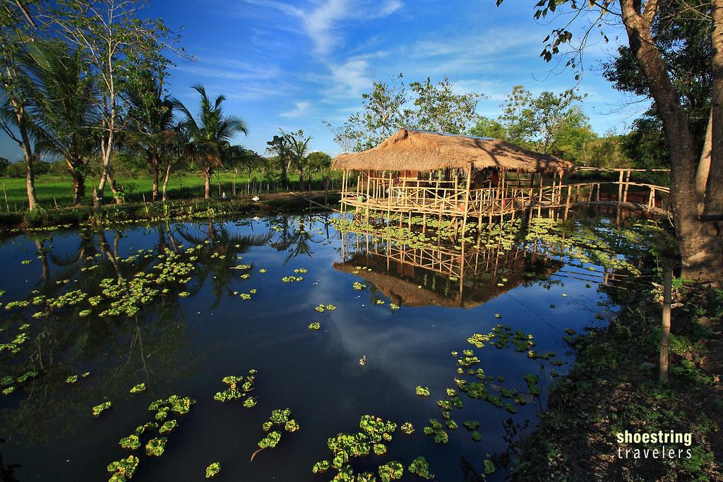 reflections at farm pond, Palayan, Nueva Ecija