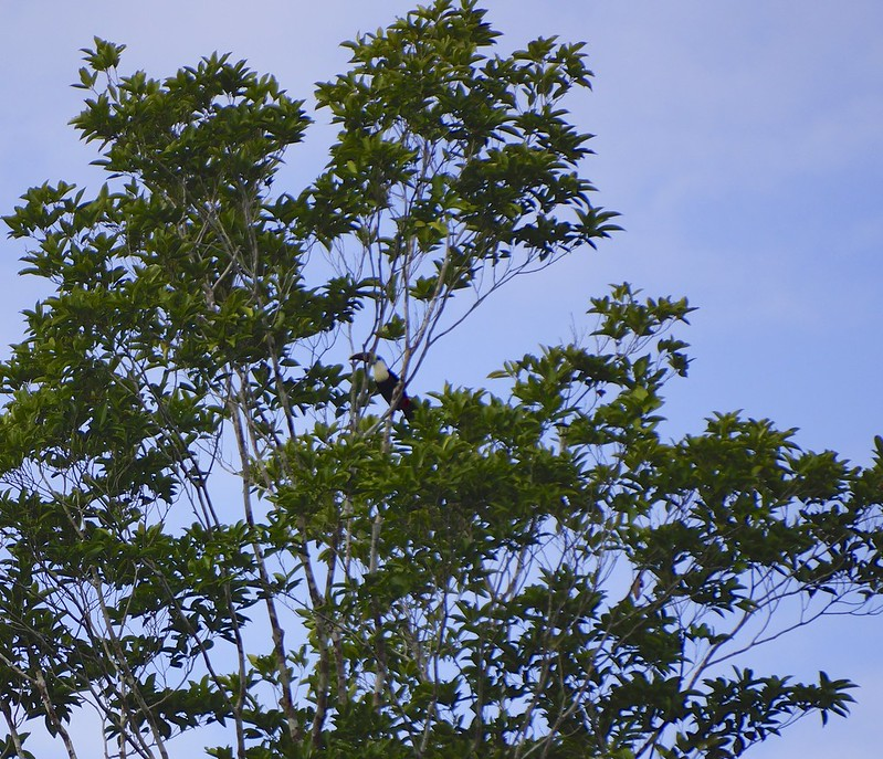 manaus-rio negro-amazon 55
