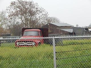 1955 Ford F- 600   Retired but still tuff