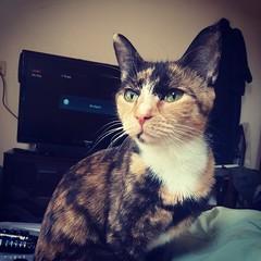 Babykit! #catstagram #catsofinstagram #evilkitty