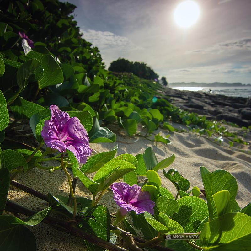 Bunga di Tepi Pantai Goa Cina