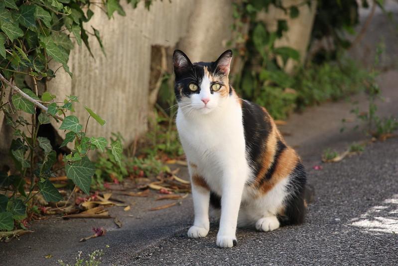 provence village caderousse street cat