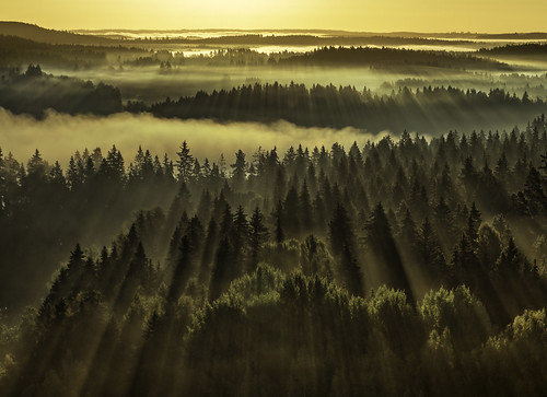 morning autumn trees light panorama sun sunlight mist fall nature beautiful beauty horizontal misty fog forest sunrise suomi finland landscape outdoors dawn photo amazing colorful europe ray shadows shine foggy earlymorning dramatic naturallight panoramic beam rays through finnish spruce shining beams maisema sunray gleaming sunbeams raysoflight newday hämeenlinna originalimage aulanko colorimage fav100 fav200 fav300 sunlightthroughtrees fav500 canon7d fav400 throughforest milamai aulankovuori