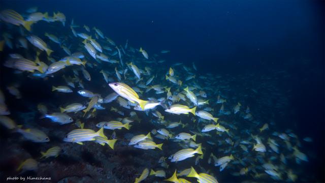 まずは隠れ根でモルディブの魚影の濃さを最後に味わいました♪