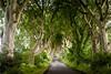 Dark Hedges - North Ireland.