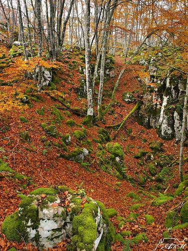 Otoño en el monte Orceo (Valle de Losa)