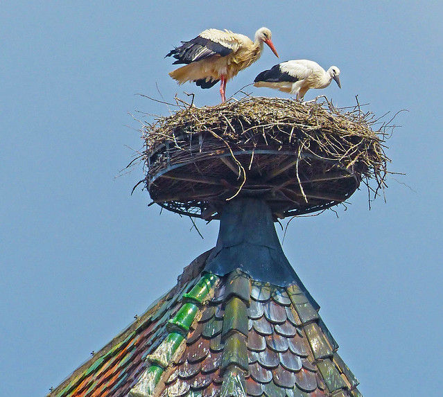 Storks on Colmar Church