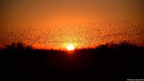 bird nature birds flying inflight nikon louisiana flight d750 welsh 2014 flightshot hughesroad jeffersondavisparish yrarf hughesroadcrawfishfarm