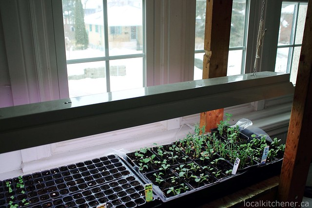 seed starting grow shelves 6