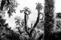 Botanical Art And Gothic