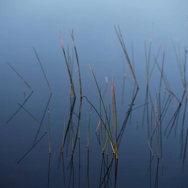 Foins sur le lac...!!!