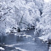 Winter in Almondell & Calderwood Country Park by dandi723