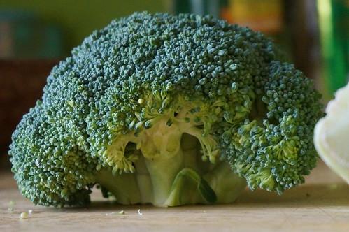Broccoli! Like a tiny forest.