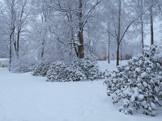 Luminen maisema Vanhan hautausmaan puistossa Hämeenlinnassa 2.2.2015