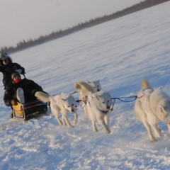 pet(0.0), dog(1.0), vehicle(1.0), snow(1.0), mammal(1.0), dog sled(1.0), sled dog racing(1.0), sled dog(1.0), sled(1.0),
