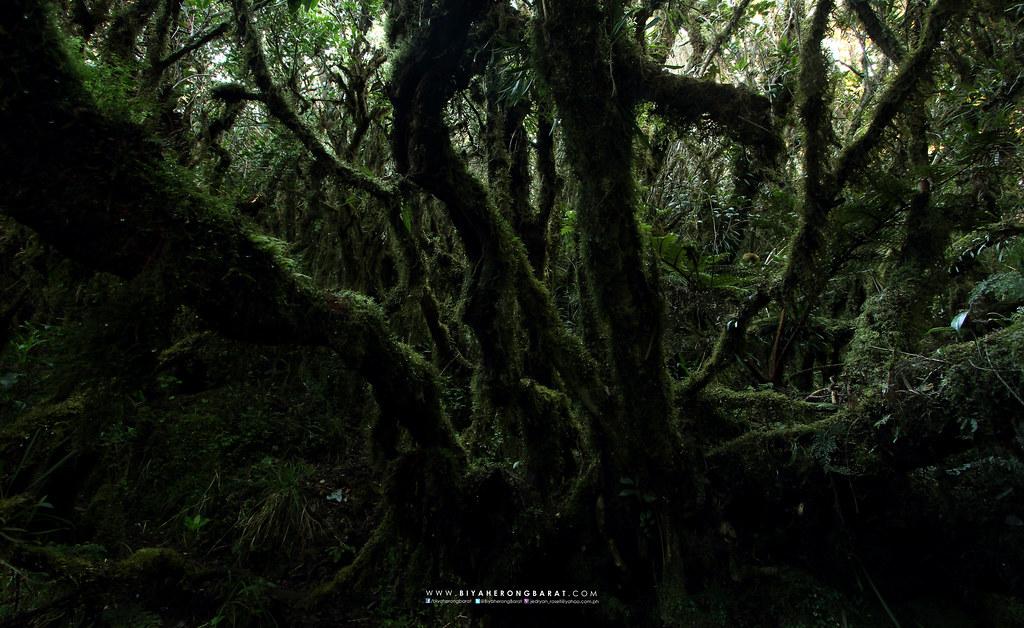 Mount Tabayoc Kabayan Benguet mossy forest