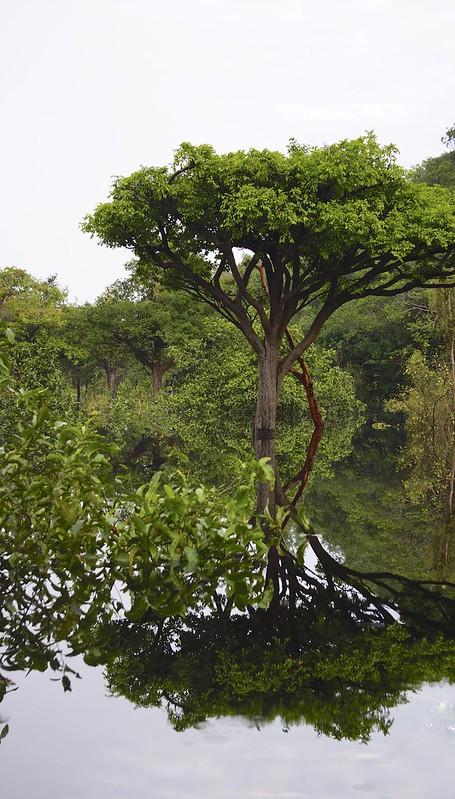manaus-rio negro-amazon 49