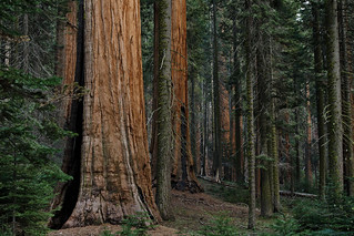 Sequoia National Park, CA | Roland Krinner