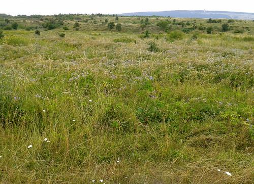 Gebietsbild, rund um den Landschaftspark Nohra , NGID234945786