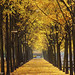 simple seasonal joys of great impact - HTT! by lunaryuna