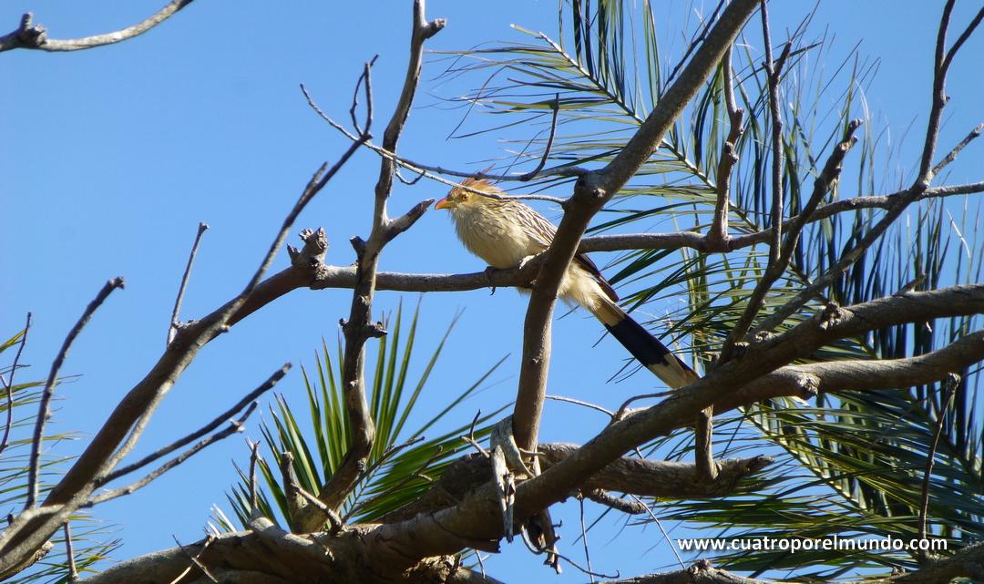 Precioso pájaro en las ramas de un arbol cercano