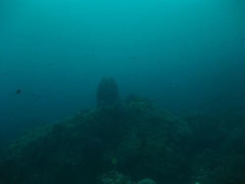 Moody Coral Landscape, Sabang, Puerto Galera