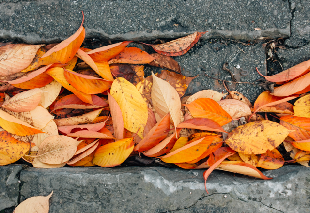 orange and yellow autumn leaves