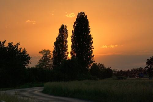 road trees sunset landscape poland polska droga drzewa krajobraz zmierzch