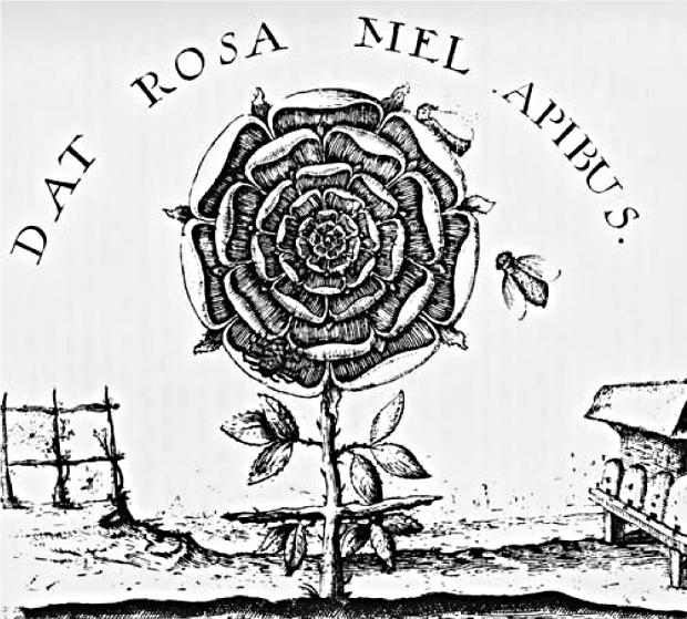rosicrucian-allegory