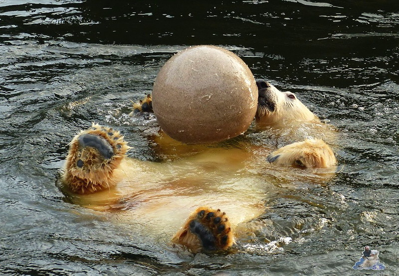 Tierpark Berlin 06.12.2014 172