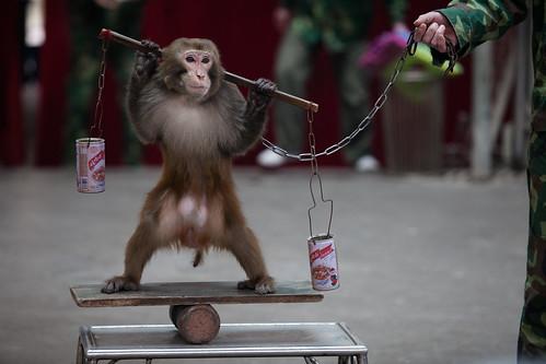 Monkey performance, China 2014