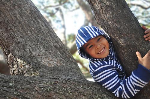 Nolin tree