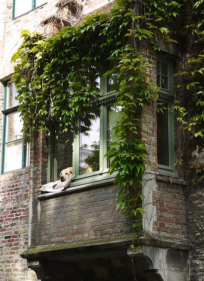 belgium_brugge_lazydog1