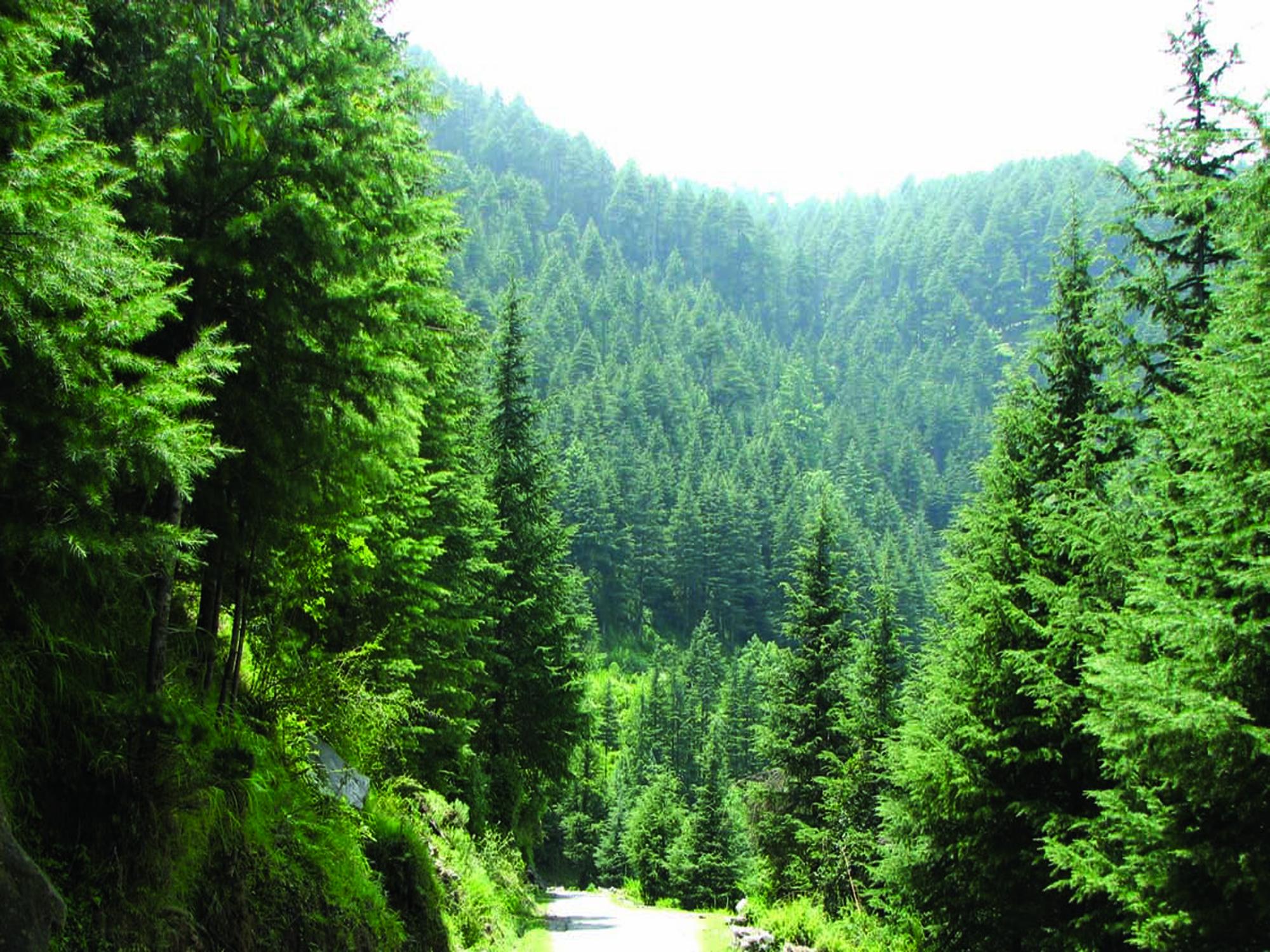 खतरे में वन