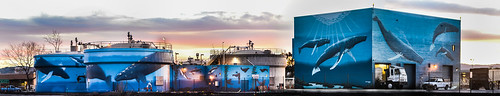 california blue winter sunset sky panorama color art giant nikon mural industrial large panoramic bayarea whales eastbay oceans february livermore stitched tanks alamedacounty d800 2015 boury waterreclamationplant pbo31 darrengreenwood