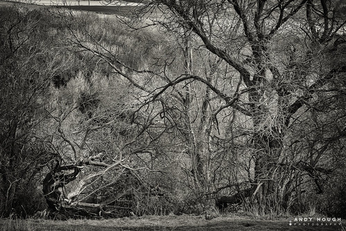 trees england blackwhite unitedkingdom branches sony textures fantasy complexity complex wallingford struggle dreamscape southoxfordshire a99 sonyalpha andyhough slta99v andyhoughphotography
