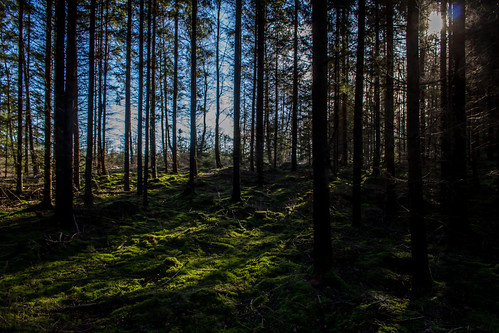 sol skog sverige träd höör orup skånelän mellanskåne