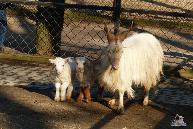 Tierpark Hagenbeck 27.02.2015  41