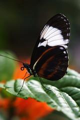 Papillons en Liberté 2015 - Photo 19