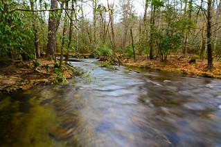 Abrams Creek Cades Cove GSMNP
