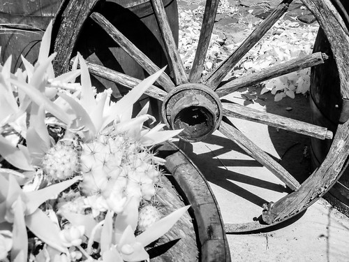 wheel cactus bw black blackandwhite blackwhitephotos blackwhite ir infrared 850nm panasonic tz10 garden